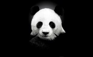 6784934-cute-panda-wallpaper